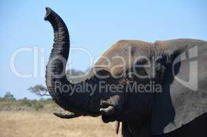 Elefanten Simbabwe (30)