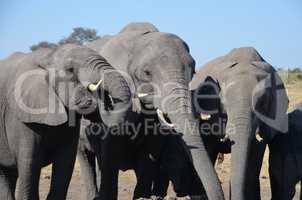 Elefanten Simbabwe (31)