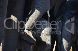 Elefanten Simbabwe (32)