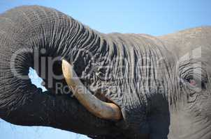 Elefanten Simbabwe (34)