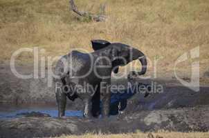 Elefanten Simbabwe (37)