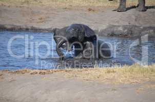 Elefanten Simbabwe (38)