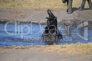Elefanten Simbabwe (39)