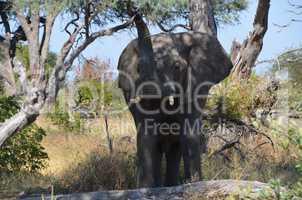 Elefanten Simbabwe (4)