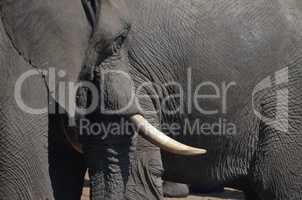 Elefanten Simbabwe (8)