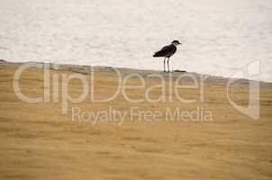 vogel am sandstrand