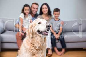 Pet in living room and family sitting on sofa