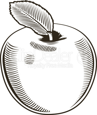 Apple in vintage style.