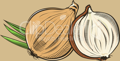 Onion in vintage style.