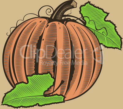 Pumpkin in vintage style.