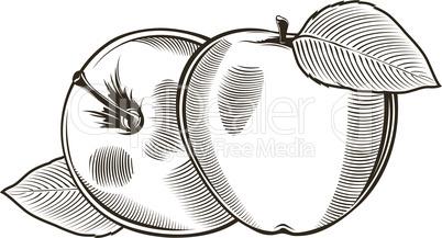 Apples in vintage style.