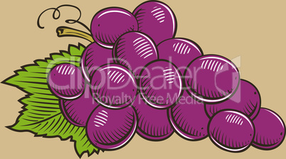 Grapes in vintage style.