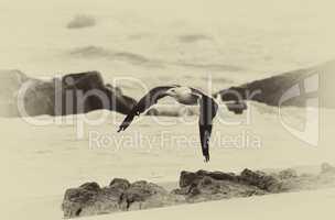 Sepia Seagull