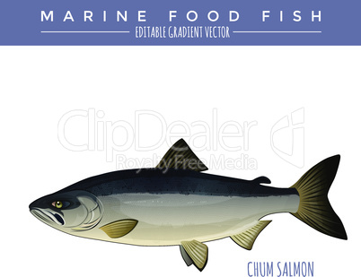 Chum Salmon. Marine Food Fish