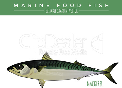 Mackerel. Marine Food Fish