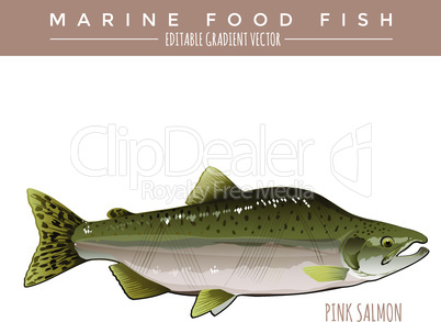 Pink Salmon. Marine Food Fish