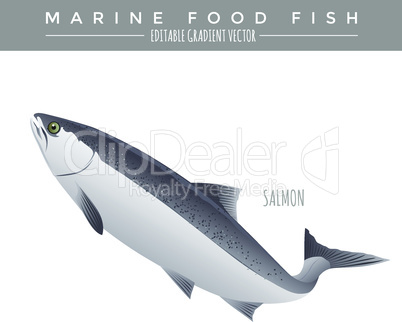 Salmon. Marine Food Fish