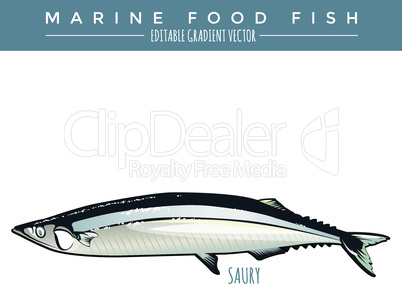 Saury. Marine Food Fish