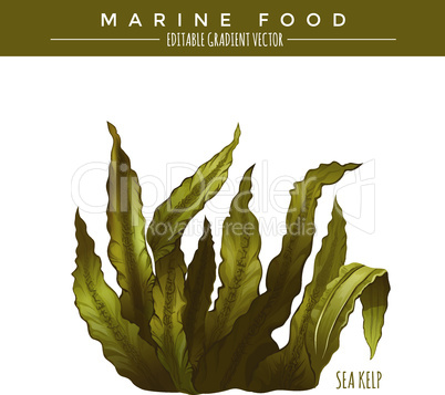 Sea Kelp. Marine Food