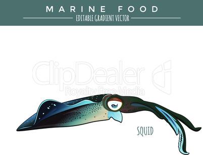 Squid. Marine Food Fish