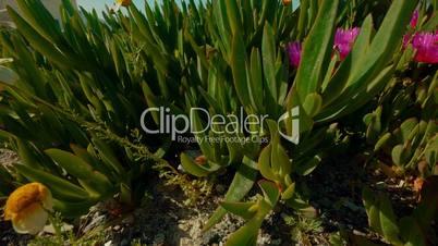 Close-up Shot Showing Exotic Vegetation in a Mediterranean Island