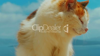 Ultra Close-up of a Cat Set Against Blue Sky Background