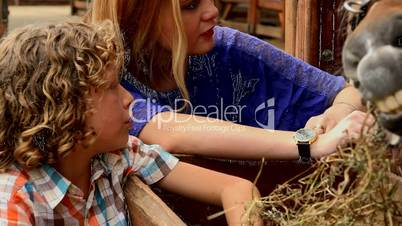 Boy And Girl And Farm Animals