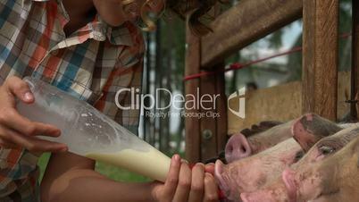Feeding Pigs At Farm