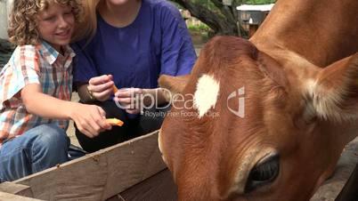 Kids Visiting Cattle Farm