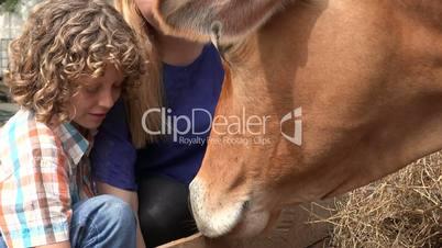 Feeding Cow At Farm