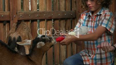 Feeding Goats At Farm