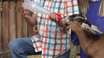 Hungry Goat Sucking Milk