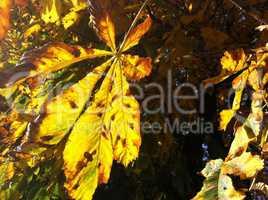 Leaves in the sun of Paris / Herbstlaub in der Sonne