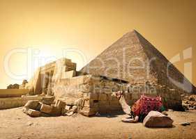 Camel and ruined pyramid