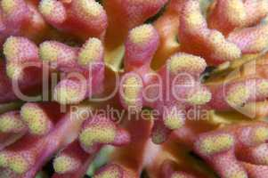 Coral, close-up, Red Sea, Egypt, Africa