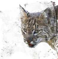 Wild Bobcat Watercolor