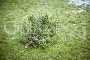 used christmas tree