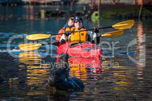 Twin kayak passing Antarctic fur seal pup