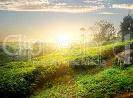 Sun over Nuwara Eliya