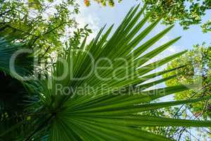 Image of palm leaf in rainforest. Thailand