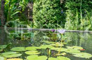 Image of pond with waterlilies in botanical garden