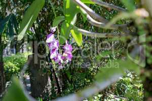 Image of tropical garden in which grow orchids