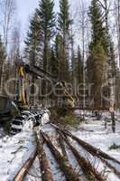 Log loader cutting tree in winter forest