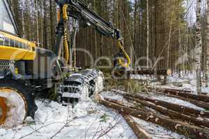 Image of logger cut down trees in winter forest