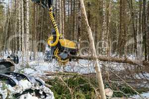 Image of logger cut down the tree and sawing it