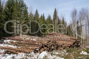 Forestry. Logs stacked in pile after felling