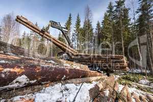 Image of logger loads harvested trunks in forest