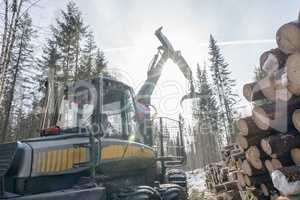 Forestry. Image of logger at work in winter woods