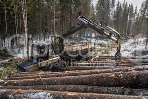 Woodworking. Logger loads harvested trunks