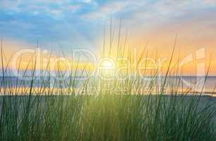 Dune Grass - Sunrise 1